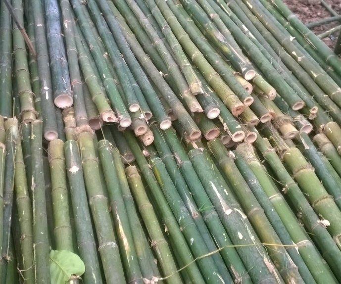 Chuẩn bị nguyên liệu làm gỗ tre ghép