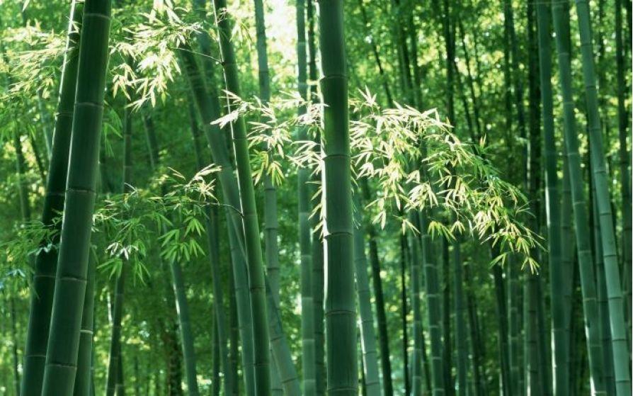 Top 10 cây phong thủy trước nhà nên trồng để đem lại may mắn cho gia đình bạn